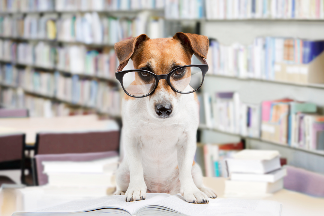 Dog in library wearing glasses.
